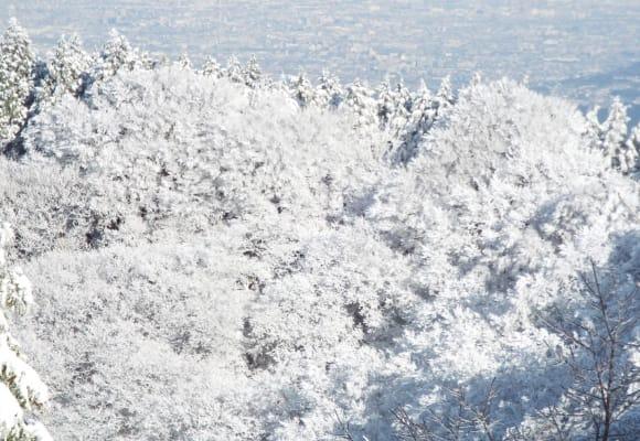 金剛山の樹氷